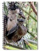 Pair Of Boat Billed Night Herons Share A Joke Spiral Notebook