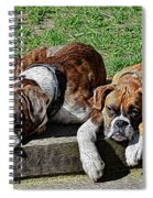 Pair Of Boxers Spiral Notebook