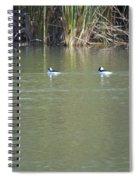 Pair Of Bufflehead Ducks  Spiral Notebook
