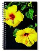 Pair Of Golden Hibiscus In Morning Sun Spiral Notebook