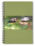 Pair Of Mallard Duck 8 Spiral Notebook