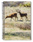 Pair Of Mule Deer Grazing At Chatfield Spiral Notebook