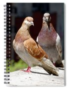 Pair Of Pigeons Spiral Notebook