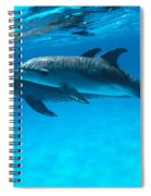 Pair Of Spotted Dolphins Spiral Notebook