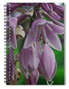 Pale Purple Starbursts Spiral Notebook