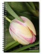Pale Yellow And Pink Tulip Spiral Notebook