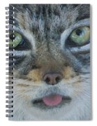 Pallas Cat Spiral Notebook