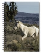 Pallaton Spiral Notebook