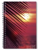 Palm At Sunset Spiral Notebook