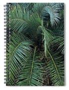 Palm Fronds Spiral Notebook