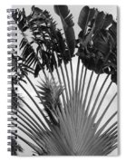 Palm Frons Spiral Notebook