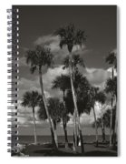Palm Group In Florida Bw Spiral Notebook