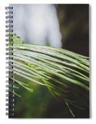 Palm Tree 5 Spiral Notebook