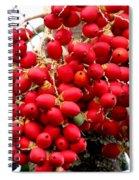 Palm Tree Seeds Spiral Notebook