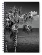 Palm Trees In Black And White At Laguna Beach Spiral Notebook