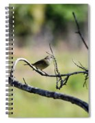 Palm Warbler Greetings Spiral Notebook
