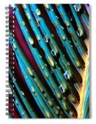 Palms After A Rainy Day Spiral Notebook