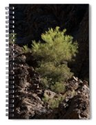 Palo Verde Spotlight-sq Spiral Notebook