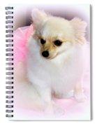 Pampered Pomeranian  Spiral Notebook