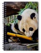 Panda Bear Spiral Notebook