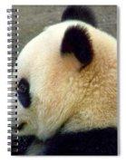 Panda Snack Spiral Notebook