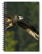 Pandion Haliaetus Spiral Notebook