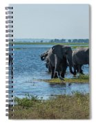 Panorama Of Elephant Herd Drinking From River Spiral Notebook