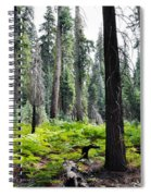 Panoramic Forest Spiral Notebook