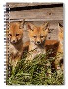Panoramic Fox Kits Spiral Notebook