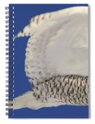 Panoramic Prairie Snowy Owl  Spiral Notebook