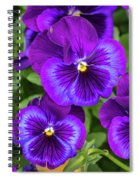 Pansies In Purple And Blue Spiral Notebook