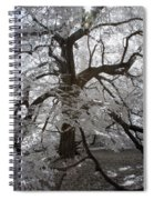 Paper Mulberry In Infrared Spiral Notebook