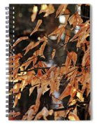 Papery Beech Leaves Spiral Notebook