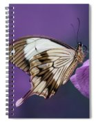 Papilio Dardanus On Violet Flowers Spiral Notebook