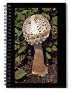 Parasol Mushroom           Macrolepiota Procera           August     Indiana   Spiral Notebook
