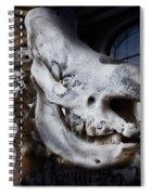 Paris Gallery Of Paleontology 3 Spiral Notebook