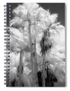 Parking Lot Palms 1 1 Spiral Notebook