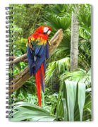 Parrot In Tropical Setting Spiral Notebook