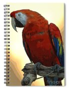 Parrot Watching Spiral Notebook