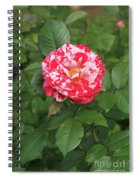Party Rose #3 Spiral Notebook