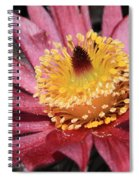 Pasque Flower Macro Spiral Notebook