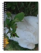 Passed Out Under The Daisies Spiral Notebook