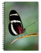 Passion-vine Butterfly 2017 Spiral Notebook