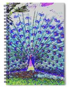 Pastel Peacock Spiral Notebook