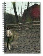 Pasture Pony Spiral Notebook