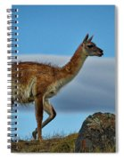 Patagonian Guanaco - Chile Spiral Notebook