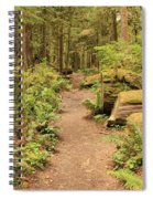 Path Through Mossy Forest Spiral Notebook