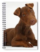Patterdale Terrier Puppy Spiral Notebook