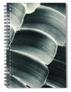 Patterned Ointment On Black Sheet Spiral Notebook