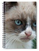Pauls Little Cat Spiral Notebook